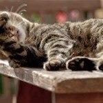 Un micio in pensione per gatti