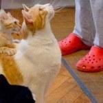 Gatto e la sua compagnia