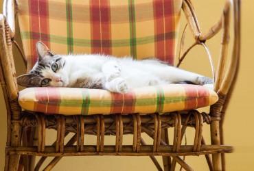 Il gatto in pensione..