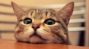 I gatti sono teneri e……..