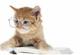 Essere un padrone responsabile di un gatto