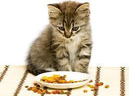 Cibo per gatti preparati in casa