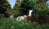 Il gatto in giardino