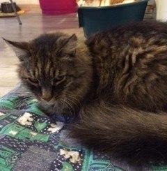 Disturbo o stato di malattia del gatto pensione per for Gatto che starnutisce