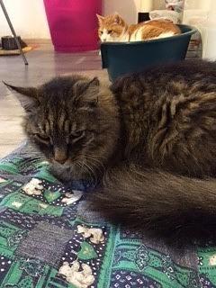 Disturbo o stato di malattia del gatto