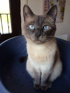 Scegliere la pensione per gatti o una cat sitter