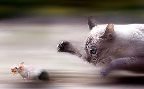 Il pericolo per il gatto che esce di casa