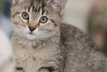 Sette cose che i gatti odiano
