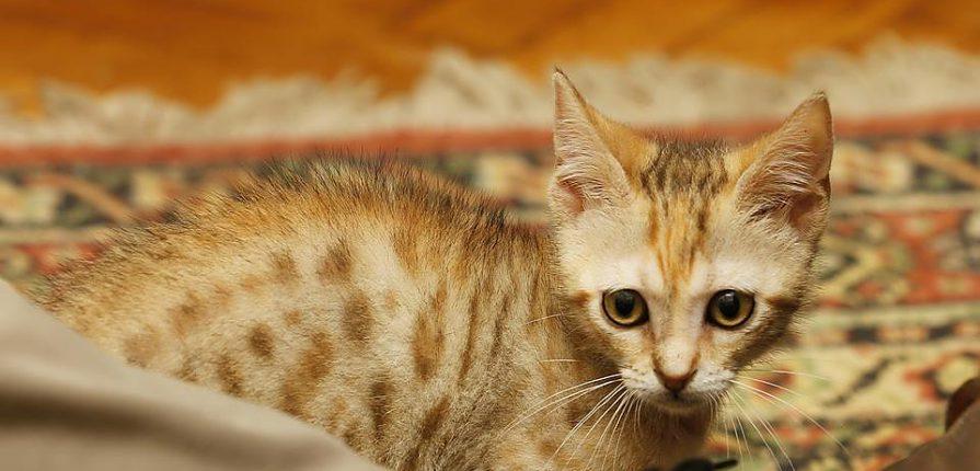 un gatto affettuoso e socievole