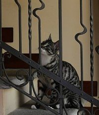 i gatti e l'odio per le porte chiuse