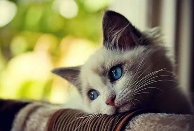 pensione per gatti priva di box e gabbia dove i gatti sono in libertà