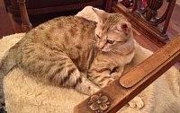 pelo tiepido e vibrante del gatto