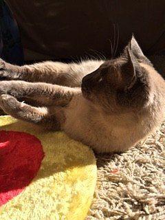 timido gatto