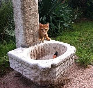giardino per un gatto