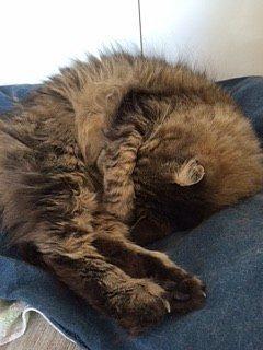 vita noturna dei gatti