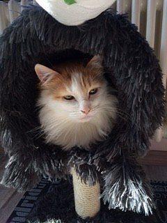 convivere con il gatto iperattivo