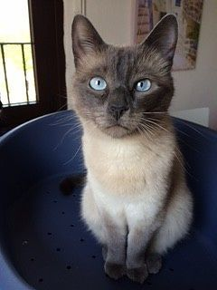pensione per gatti o cat sitter