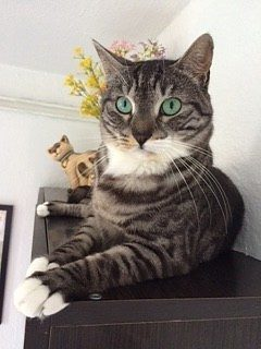 la cura del gatto