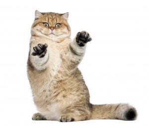Requisiti gatto pensione per-gatti-como-varese ticino milano chiasso