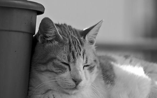 Le abitudini del gatto