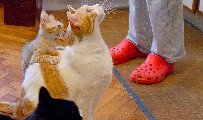 La compagnia del gatto