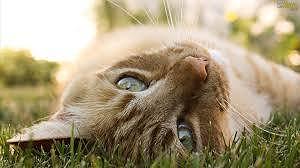 i gatti e l'erba