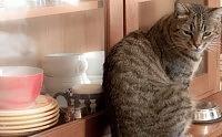 Gatto soffre di gastroenterite