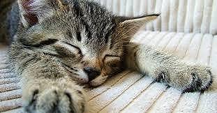 gatto con insufficienza renale