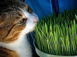 gli angoli vuoti sono occupati dai gatti