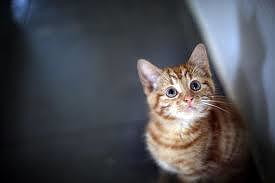 è sbagliato punire il gatto