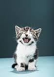 il gatto miagola di notte perché?