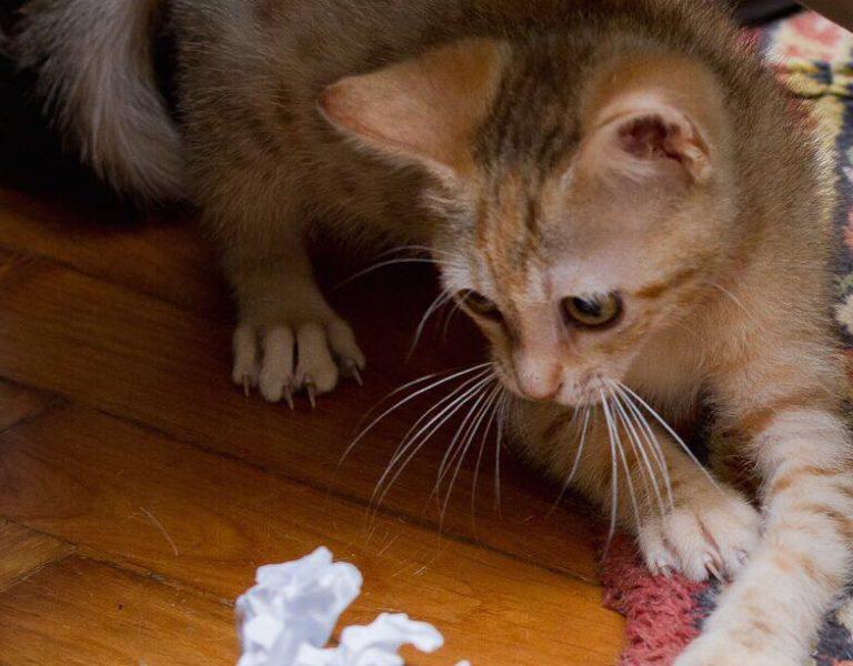 immagini di gatti giochi per gatti