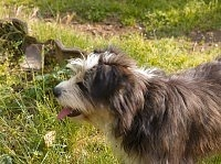 cane che mangia di fretta e è ingordo