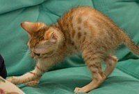 gatto ama solo la casa è un mito
