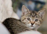 il miagolare dei gatti