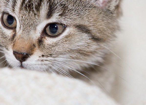 Il gatto inverno pensione da gatti for Il gatto inverno