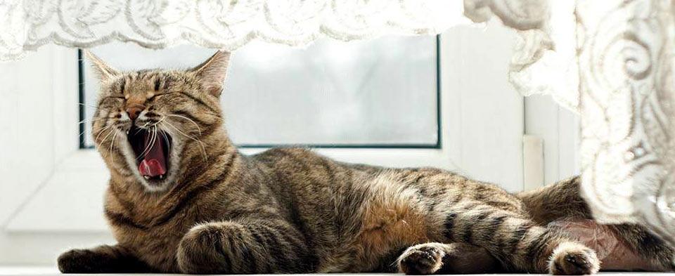 pensione per gatti senza box
