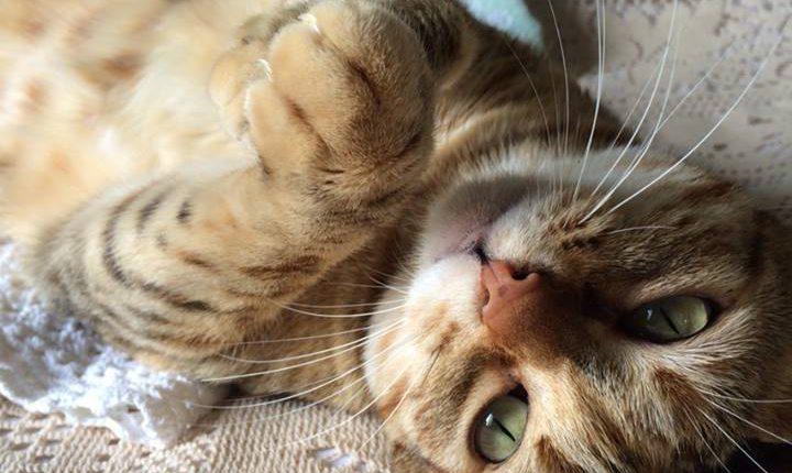 Pensione per gatti tra Varese e Como